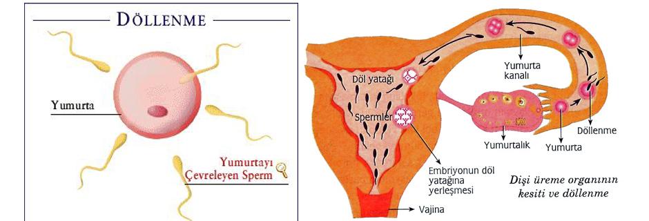 hamilelikten sonra cinsel ilişki